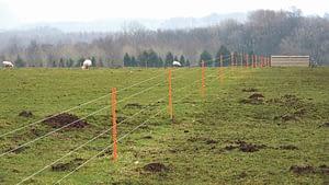 electric fence, paddock grazing, sheep